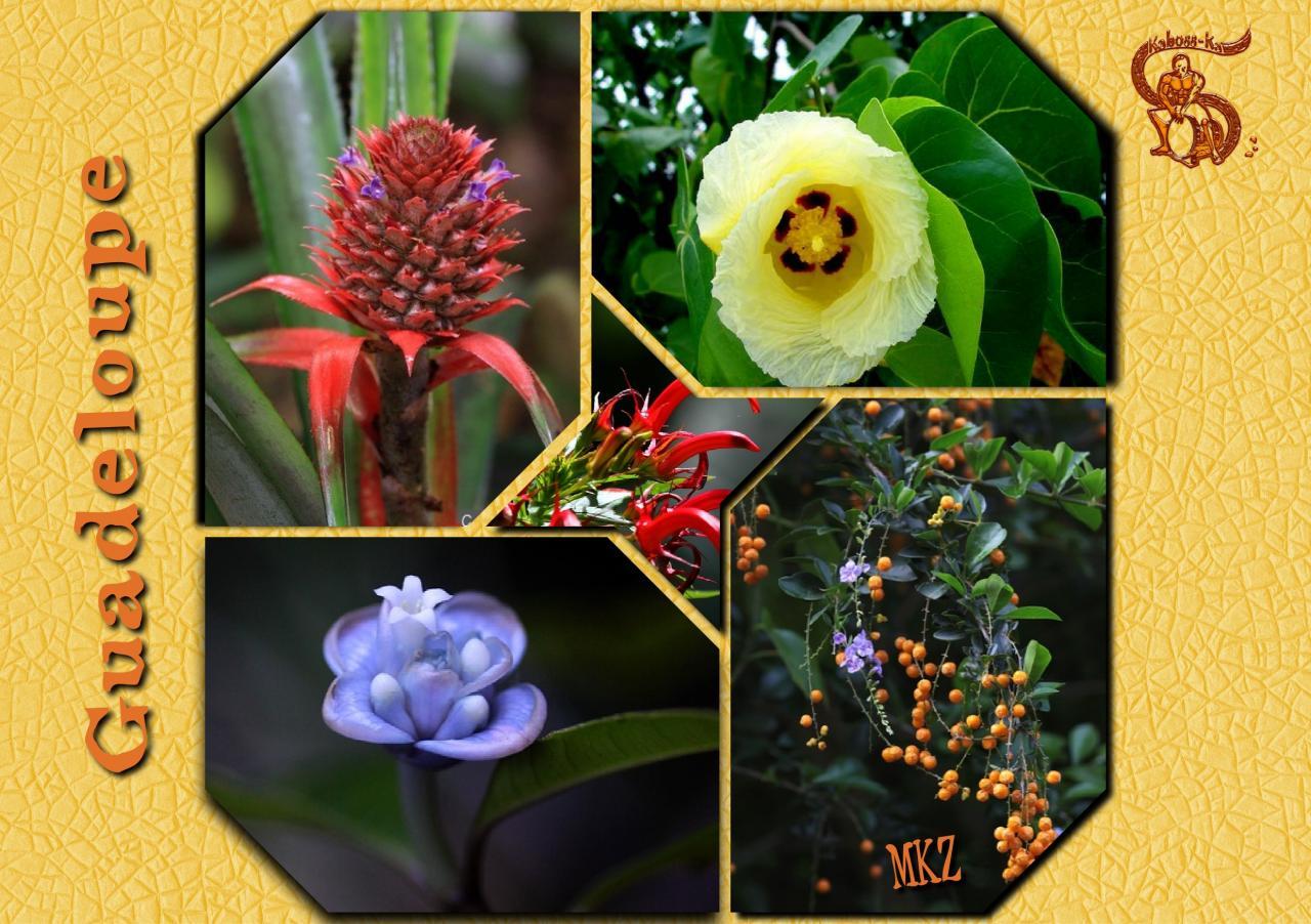 Guadeloupe - Fleurs